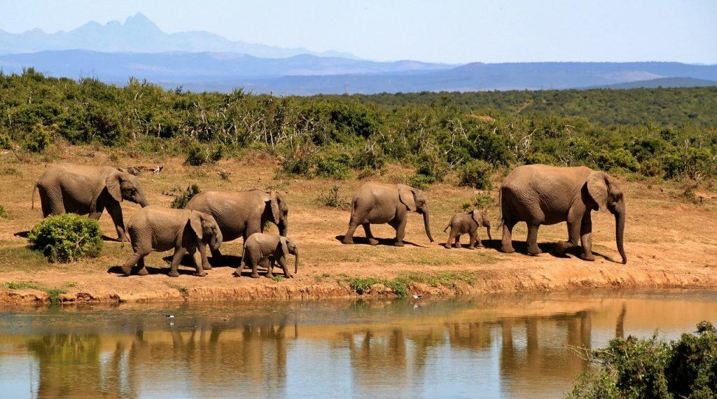 Un safari por Sudáfrica