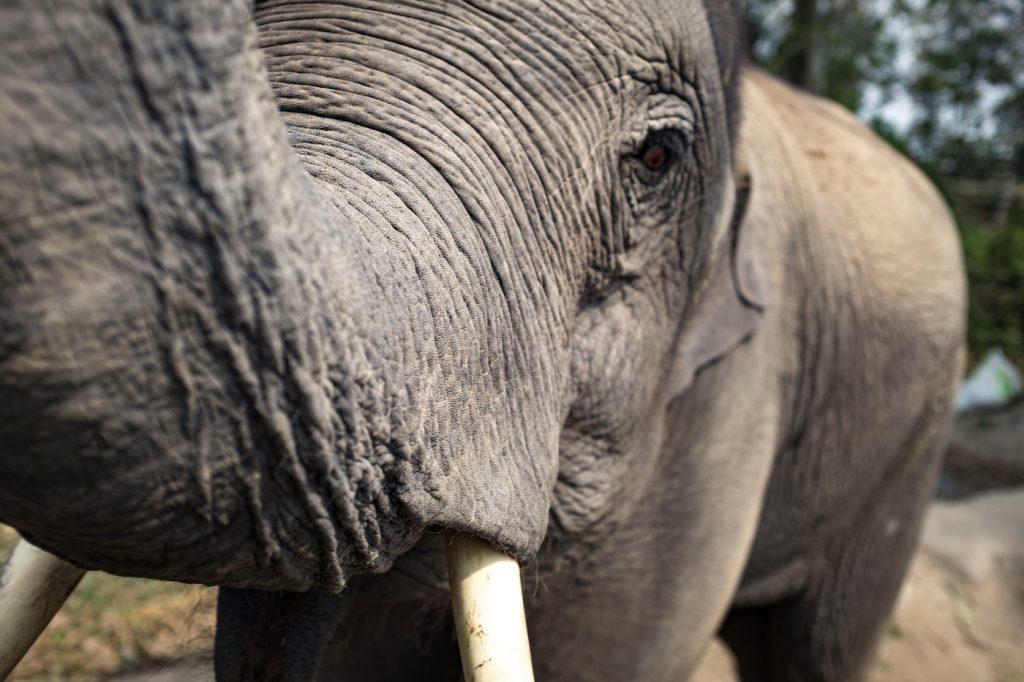 Refugio de elefantes - Foto de Jesse Schoff