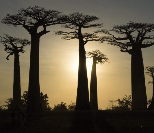 isla de madagascar en peligro de extincion