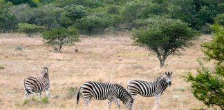 Sudáfrica turismo animales