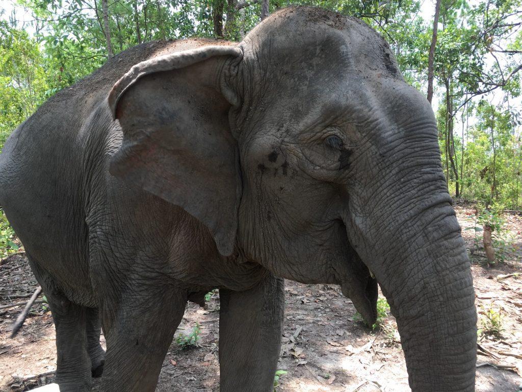 Santuarios de elefantes