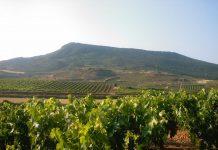 Los países con los mejores vinos