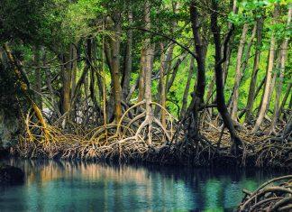 Las mejores excursiones en República Dominicana