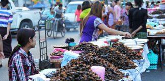 Venta Cucarachas Fritas en China