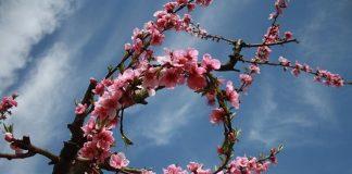 Valdelacalzada en Flor