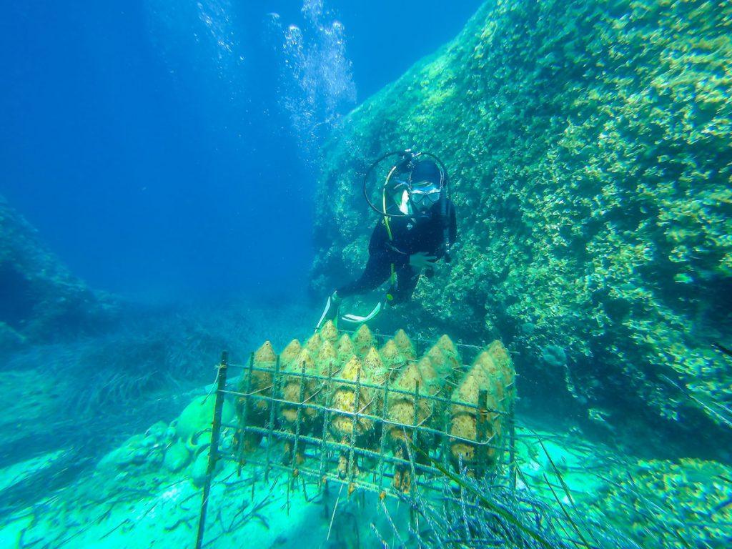 Bodega submarina Edivo