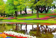 Campo tulipanes Keukenhof