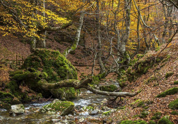 Faedo de Ciñera en otoño