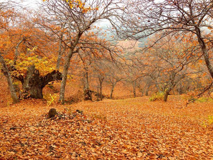 Valle del Genal en otoño