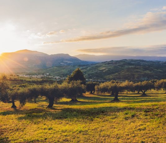 Olivares en Cataluña