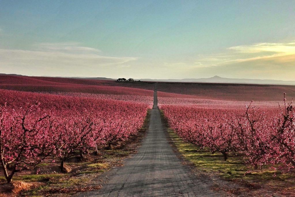 Los mejores lugares para recibir la primavera en España - Descubrir
