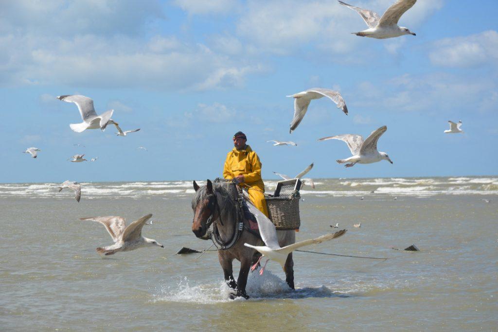 Pesca a caballo en Bélgica