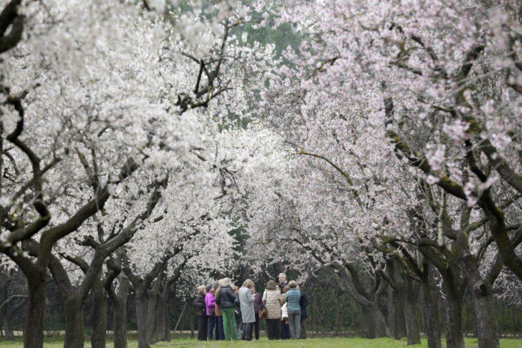Quinta de los Molinos, un oasis primaveral en Madrid - Descubrir
