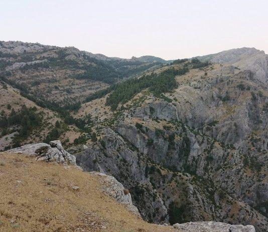 Cazorla