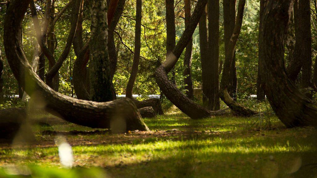 Bosques fascinantes que debes visitar - Descubrir